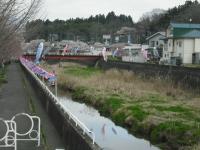 2017-04-21しろぷーうさぎ鯉28