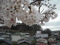 2017-04-21しろぷーうさぎ49