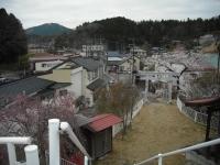 2017-04-21しろぷーうさぎ37
