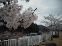 2017-04-21しろぷーうさぎ47