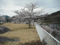 2017-04-21しろぷーうさぎ46
