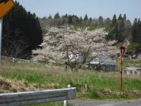 2017-04-25しろぷーうさぎ04