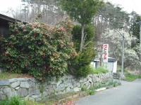 2017-04-26しろぷーうさぎ03