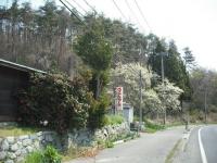 2017-04-29しろぷーうさぎ03