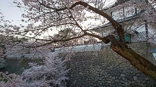 5DSC_0183櫻