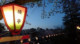 9DSC_0221櫻