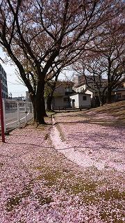 DSC_0306春