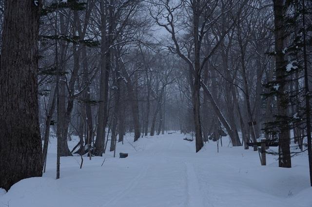 森の小路6