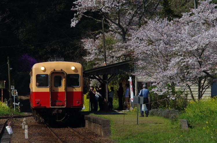2017年04月16日 小湊 いすみ_038