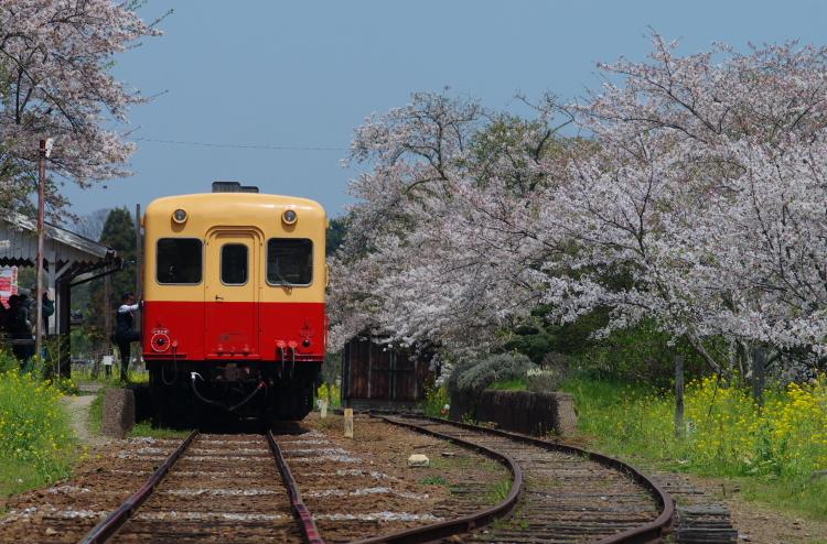 2017年04月16日 小湊 いすみ_066