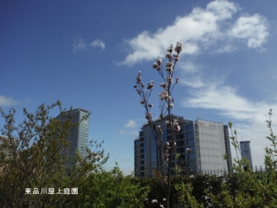 amamogawa2.jpg