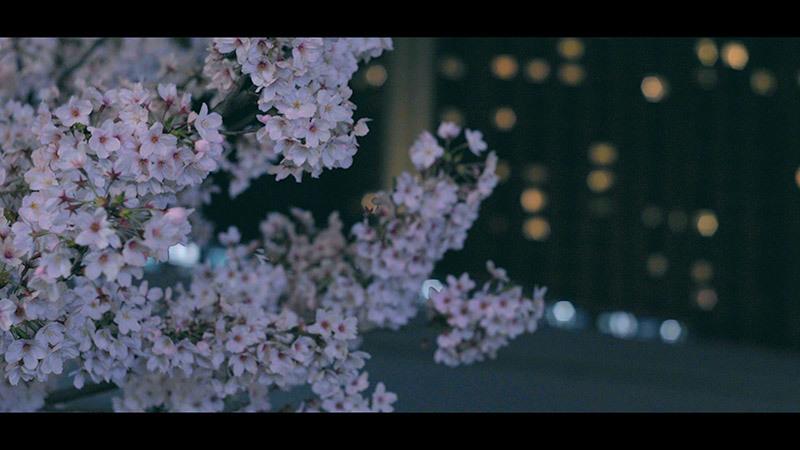 夜の散歩_15_s