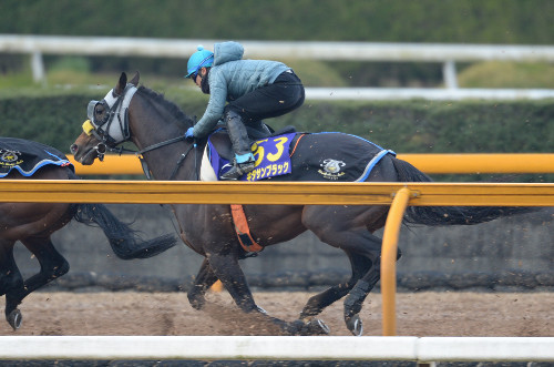【大阪杯】キタサンブラック最終追いで条件馬に遅れ。調整失敗か