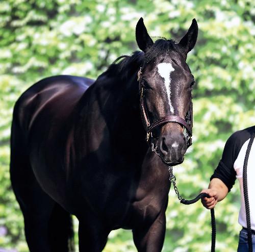 【桜花賞】阪神JF、チューリップ賞とも1番人気の馬が桜花賞出走したら勝率100%