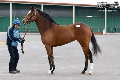 【競馬】今年のサンデーRの募集馬ラインナップが凄すぎるwwwwwww