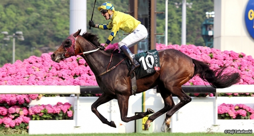 【海外競馬予想】クイーンエリザベス二世カップ(GⅠ)