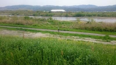 京都自転車道8 (7)