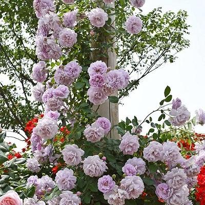 roseshop_322-1303060106-126_2.jpg