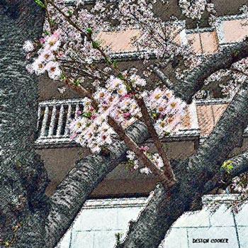 2017 桜 春 開花予想