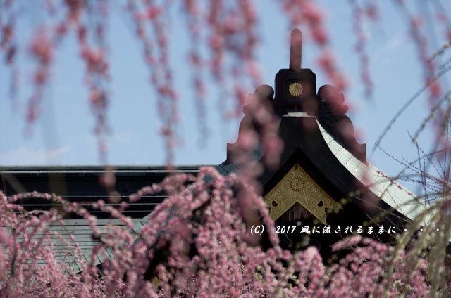 三重・結城神社 枝垂れ梅10