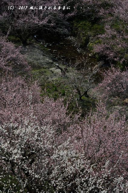 奈良の絶景! 賀名生梅林(あのうばいりん)の風景15