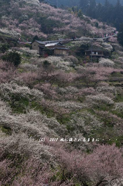 奈良の絶景! 賀名生梅林(あのうばいりん)の風景13
