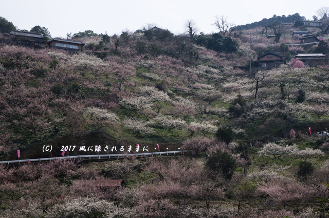 奈良の絶景! 賀名生梅林(あのうばいりん)の風景8