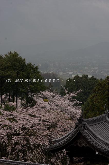 桜の情景 奈良・雨の九品寺の桜13