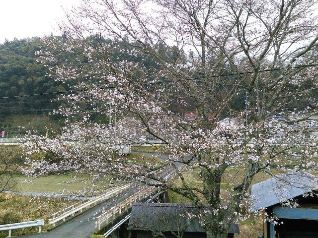 29408urasaku2.jpg