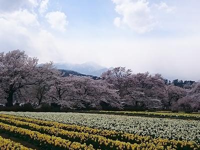 yuhige984 (4)