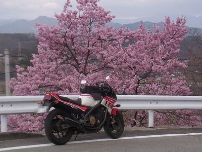 yuhige984 (15)