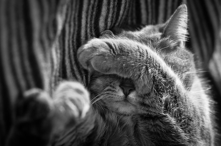 1215846_cat-black-and-white-photography-7.jpg