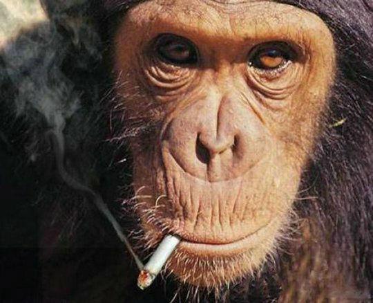 smoking_monkeys_24.jpg