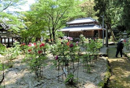 牡丹園 (3)