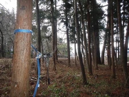 くるみの木 (1)