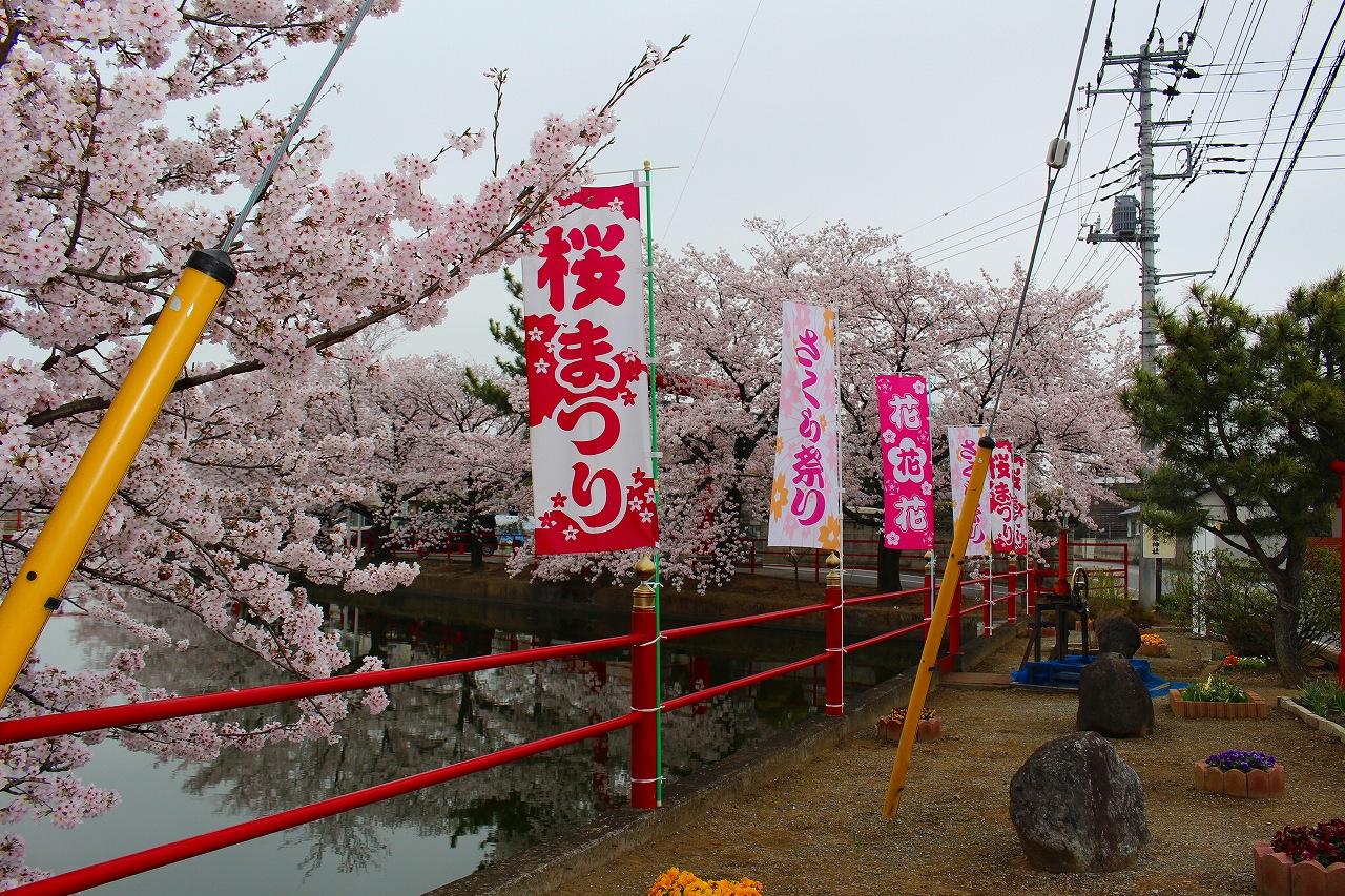 桜 白龍神社 (5)