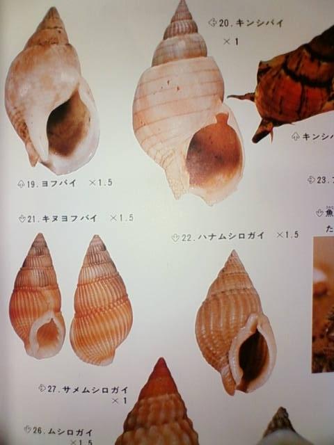 shell_a.jpg
