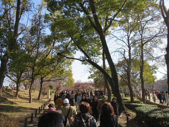 大阪城公園梅林2017-09