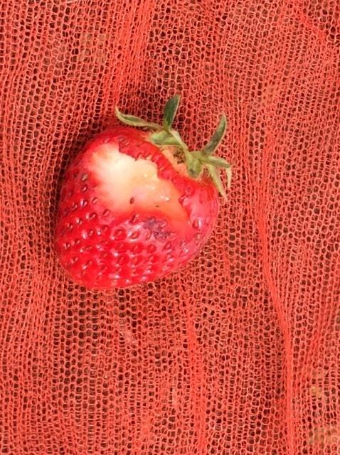 イチゴがかじられた。犯人は?