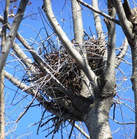 カラスの巣にハンガー