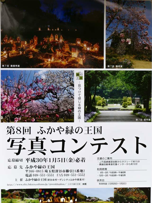 20170218福寿草_緑の王国14