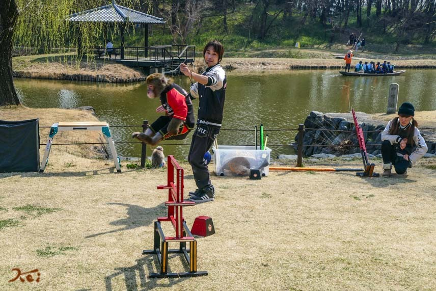 20170320花桃_古河18