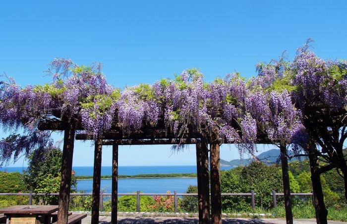 藤の花の風景 2
