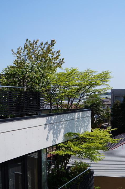 20170501yamaboshi