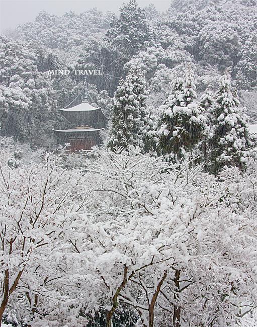 永観堂 雪
