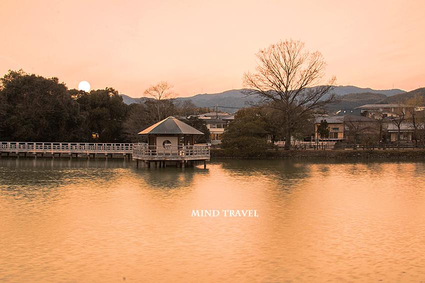 八条池 夕景