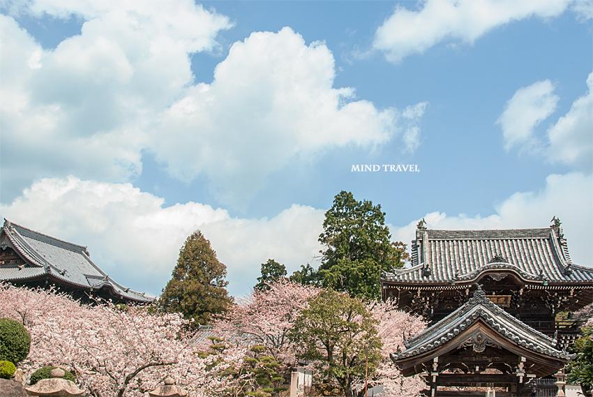 粉河寺 桜3