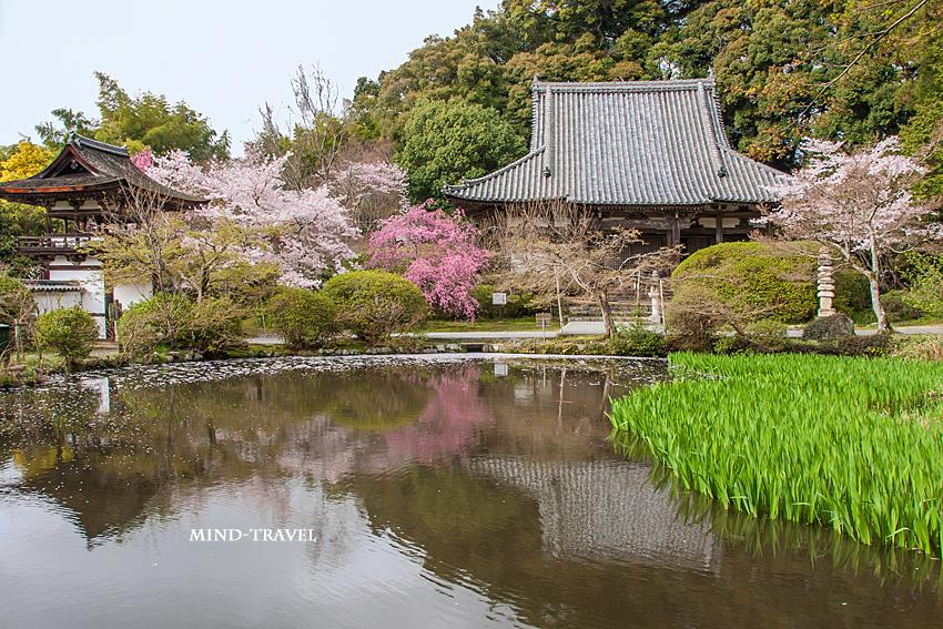 長岳寺 桜
