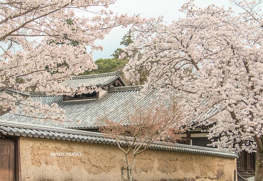 東大寺 お湯屋 桜