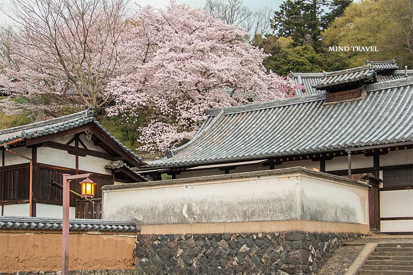 二月堂 桜2